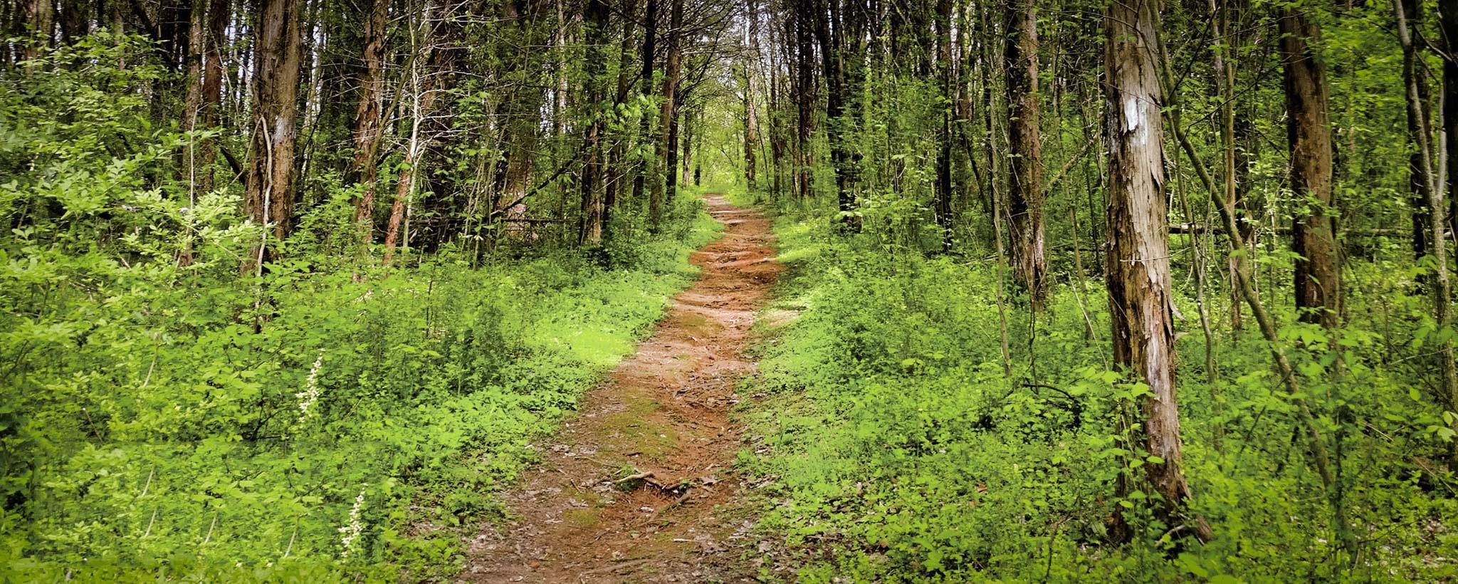 Melton Hill Trail